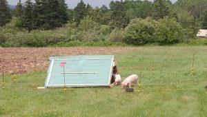 Image - Pig Shelter 2.0