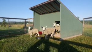 The Field Shelter at Simply Ducky Farm