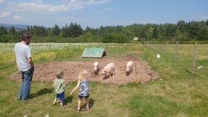 Piggies! at Simply Ducky Farm