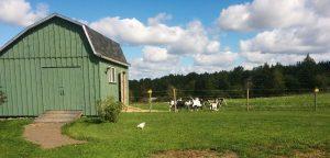 The Goat Barn at Simply Ducky Farm