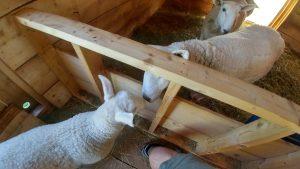 Simply Ducky Farm - Close encounters of the Potato kind...