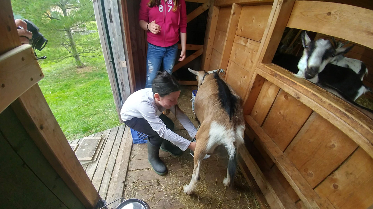 Peebles is a patient goat and is friendly towards first-time milkers :)