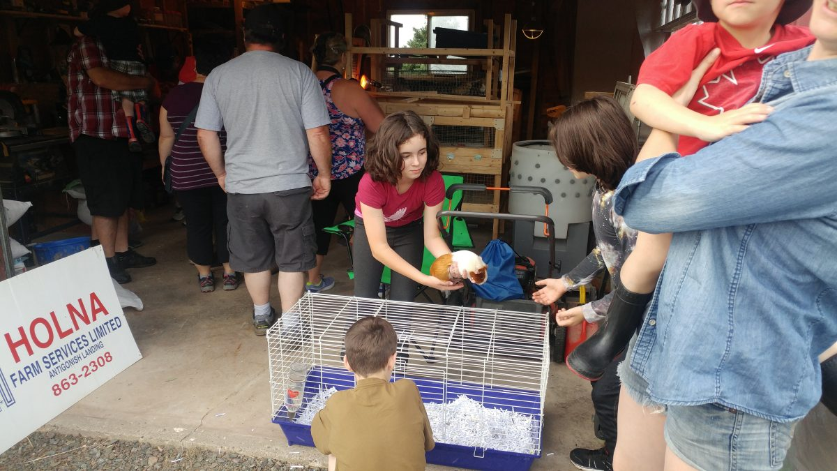 The very talented Georgina generously offered to bring her 4-H ribbon-winning Guinea Pigs which were a real eye opener for many small visitors