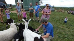 The goats quickly learned that all they had to do was stand close to the guests to get free head scratches
