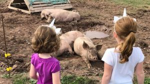 An epic stare-down between unicorns and piggies