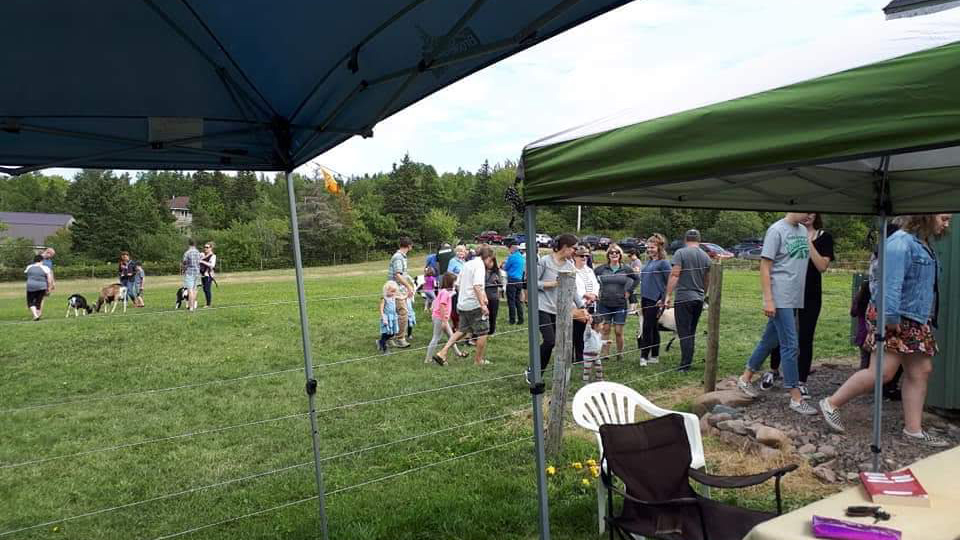 Another group of people learns a little about a small, family-sized farm during Open Farm Day