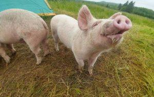 A happy piggy!