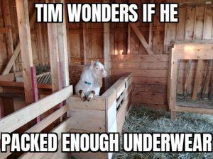 Tim Wonders